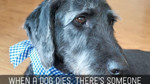 pet-loss-sympathy-messages