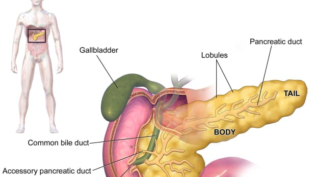 glucagon-from-the-pancreas-and-blood-glucose-level