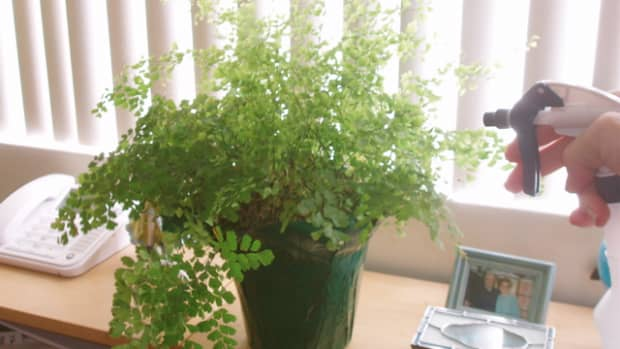 how-to-water-house-plants-for-health