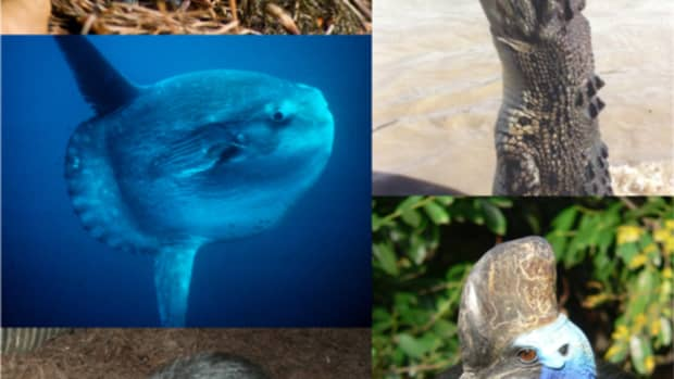 what-are-the-vertebrate-groups