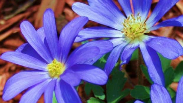 plants-that-bloom-in-winter