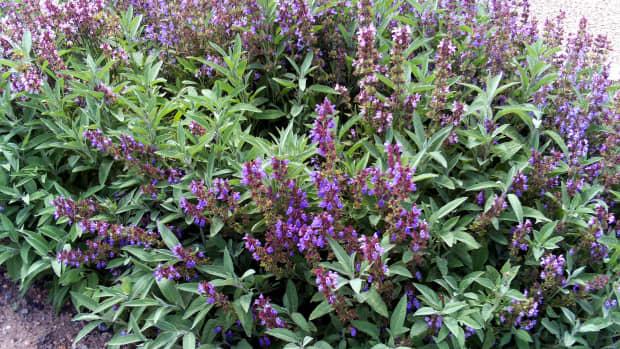 herbs-for-thyroid-health
