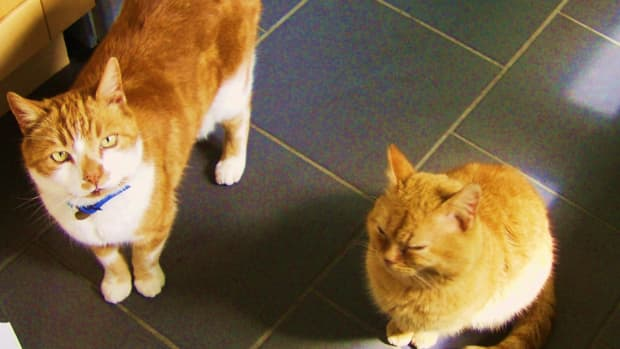 how-to-stop-a-cat-from-meowing-all-the-time