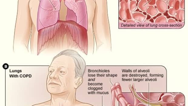 mucus-in-the-human-body
