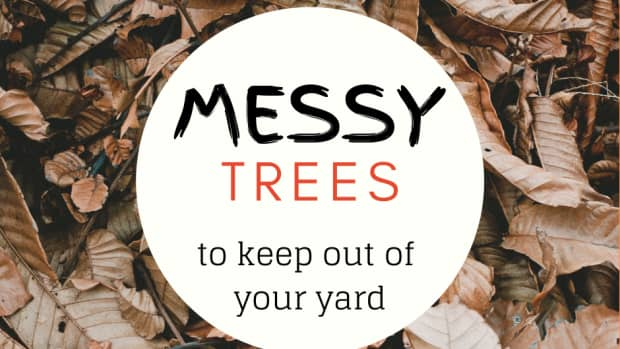 5-worst-trees-for-the-lazy-landscaper