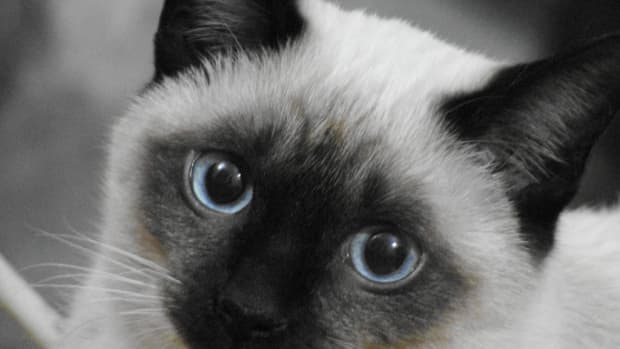 what-are-good-female-cat-names
