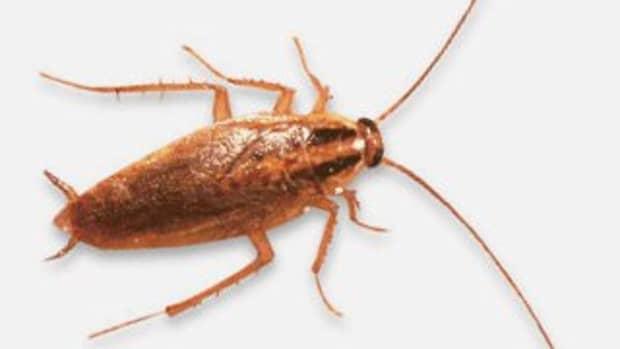 10-non-toxic-ways-to-eliminate-of-roaches