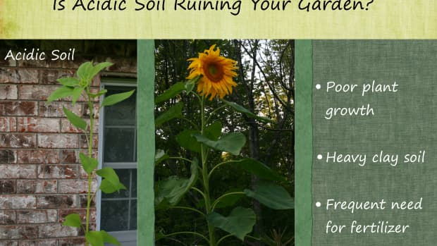 how-to-make-soil-less-acidic