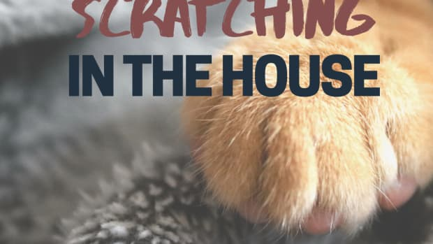 how-to-stop-a-cat-from-scratching-furniture