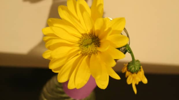 how-to-prevent-bad-odors-from-the-standing-water-in-a-flower-vase