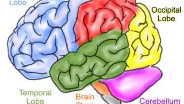 as-psychology-the-working-memory-model