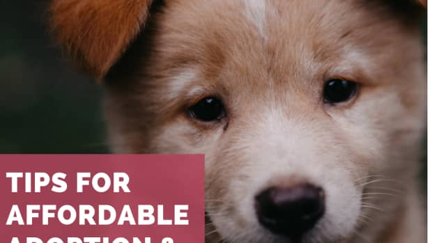 five-cheapest-sources-of-puppies