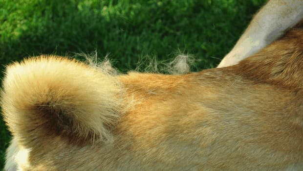 dog-grooming-what-months-do-dogs-shed-the-most