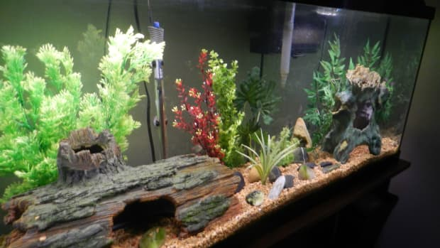 how-to-change-the-water-in-your-freshwater-aquarium-the-easy-way