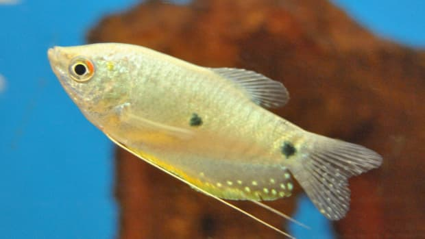 how-to-purchase-fish-for-your-aquarium