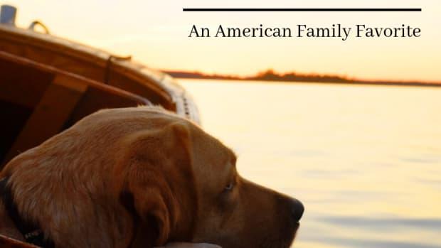 doggie-matchmaker-is-the-labrador-retriever-right-for-you