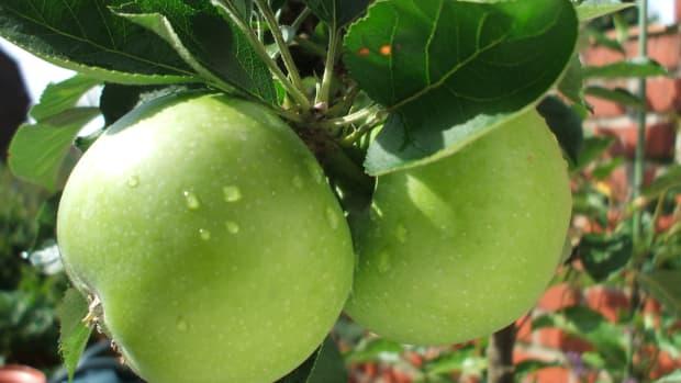 cinnamon-apples-crockpot-dish