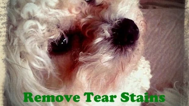 how-to-remove-tear-stains-from-your-dog-naturally