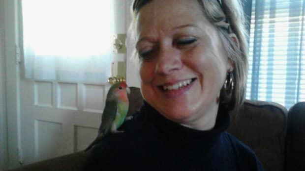 petlovebirds