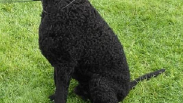 english-dog-breeds