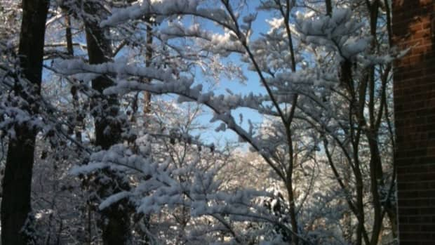 the-beauty-of-snowflakes-in-haiku