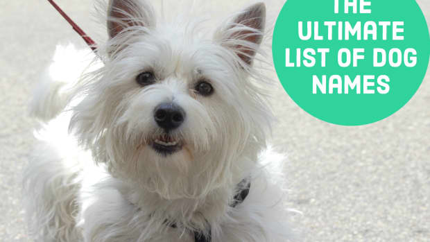 dog-names-hundreds-of-suggestions-by-color-breed-size-and-group