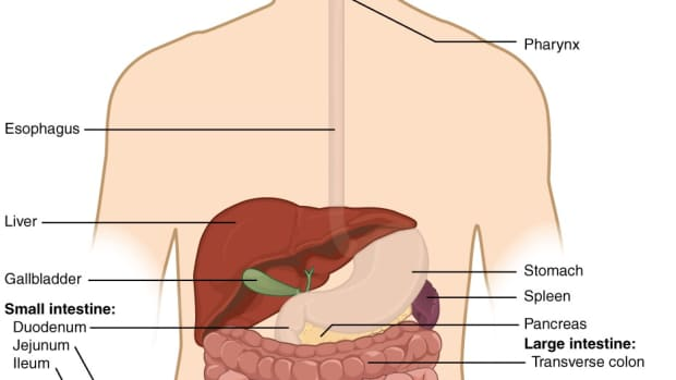 how-do-bacteria-in-the-large-intestine-help-us-stay-healthy