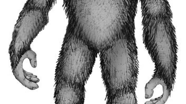 bigfoot-sightings-where-does-bigfoot-live-in-north-america