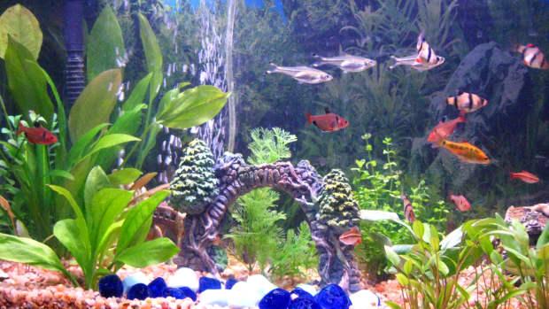 how-to-start-a-fresh-water-aquarium