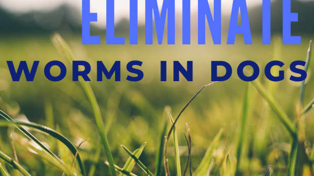 how-to-reduce-or-eliminate-worms-in-dogs