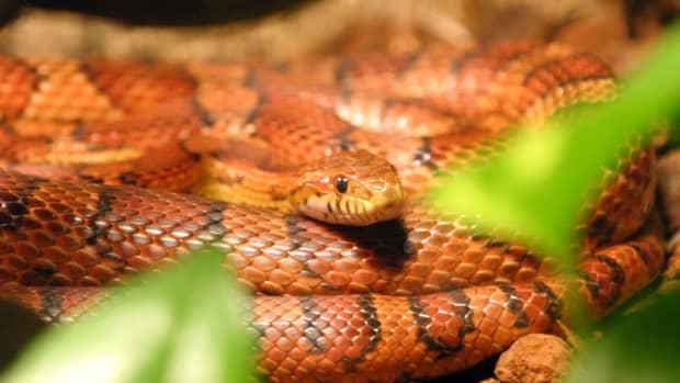 choosing_pet_snake