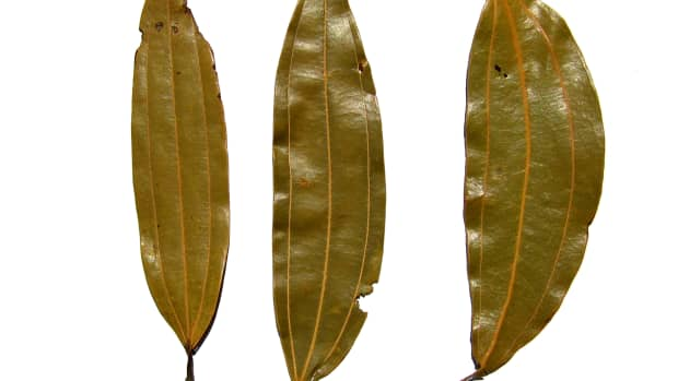 the-indian-bay-leaf-an-indian-spice-and-its-health-benefits