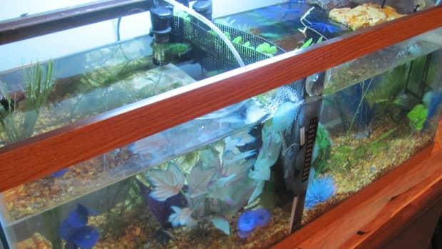 how-to-make-a-cheap-home-made-betta-tank-divider