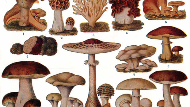 all-about-mushrooms-types-facts-tips-uses-recipes-nutritional-and-health-benefits