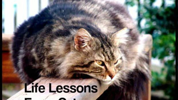 how-to-live-your-best-life-lessons-from-cats