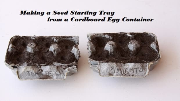 how-to-make-a-seed-starting-tray-from-a-cardboard-egg-carton