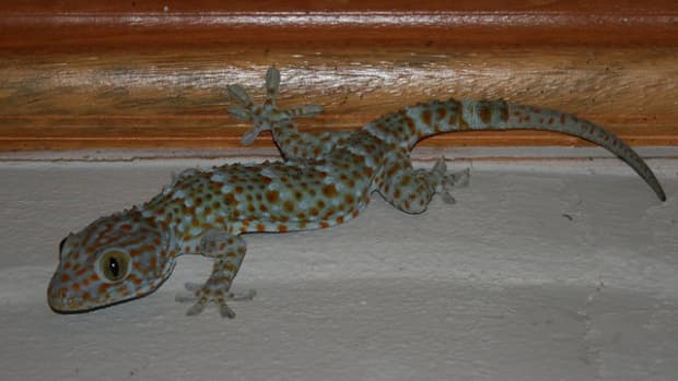 how-to-rid-your-home-of-lizards
