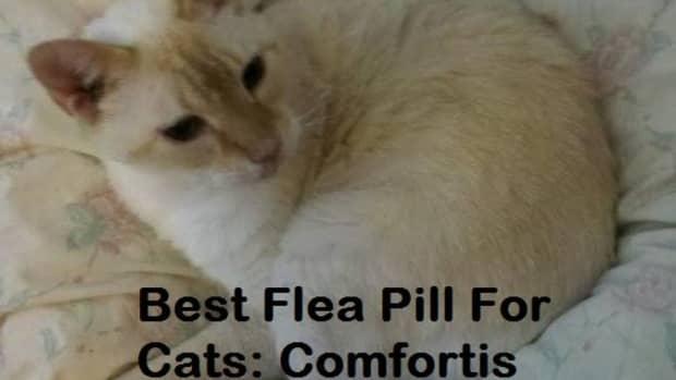 giving-a-cat-comfortis-flea-pills