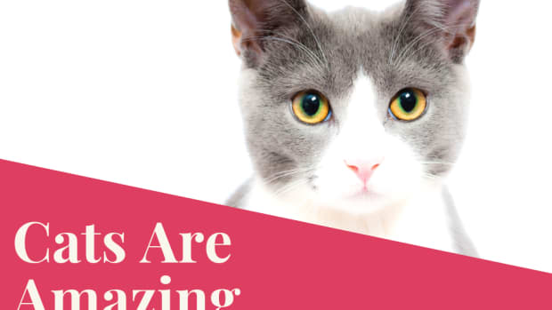 amazing-cats-and-true-cat-stories