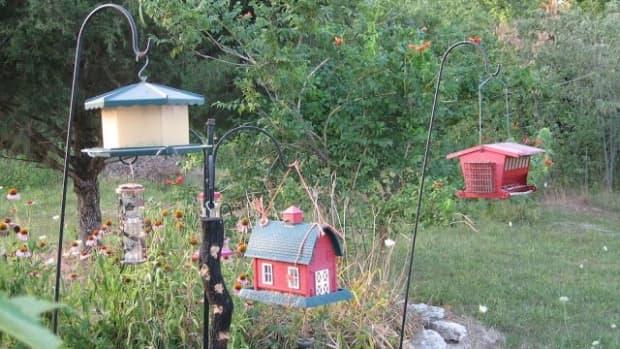 8-easy-ways-to-landscape-under-bird-feeders