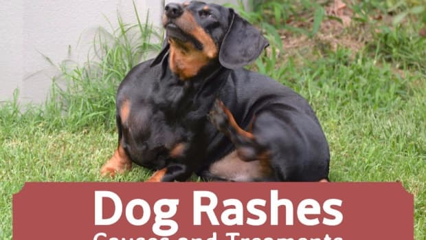 dog-skin-bumps-how-to-get-rid-of-your-dogs-skin-rash