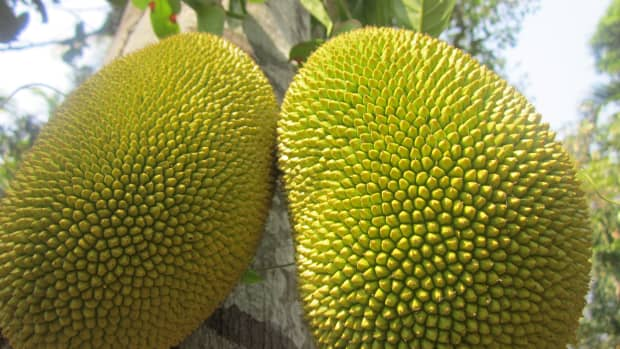 jackfruit-health-benefits-and-nutrition-facts