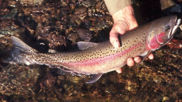 how-to-fish-with-wedding-ring-lures