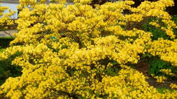 top-10-acid-loving-plants