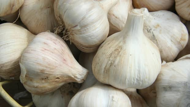 how-to-grow-garlic-a-step-by-step-guide