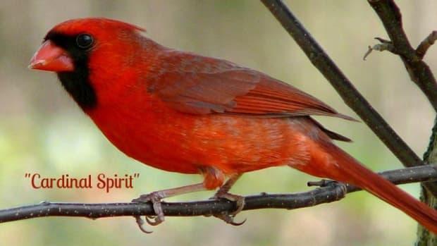 spirit-visits-from-loved-ones-cardinal-spirit-poem