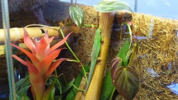 setup-day-gecko-terrarium