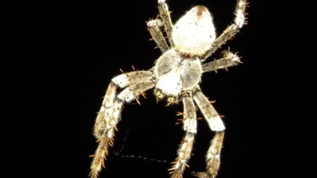 how-to-remove-spiders-from-your-home-without-killing-them