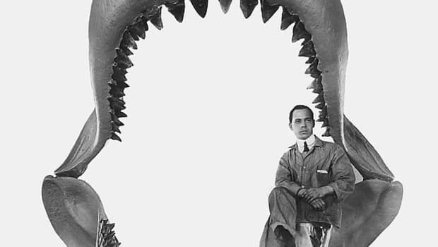 megalodon-facts