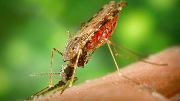 natural-mosquito-repellents-an-overview-of-plants-that-repel-mosquitoes